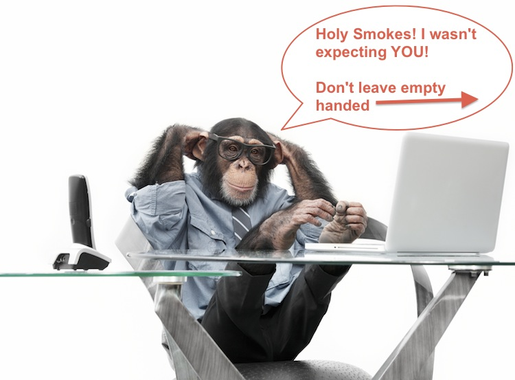 Monkey-picture_small